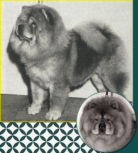 Chow Chow Breed Council